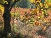 Vign_automne_070002