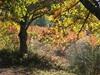 Vign_automne_070003